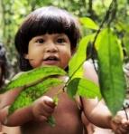 Amazonian Awa